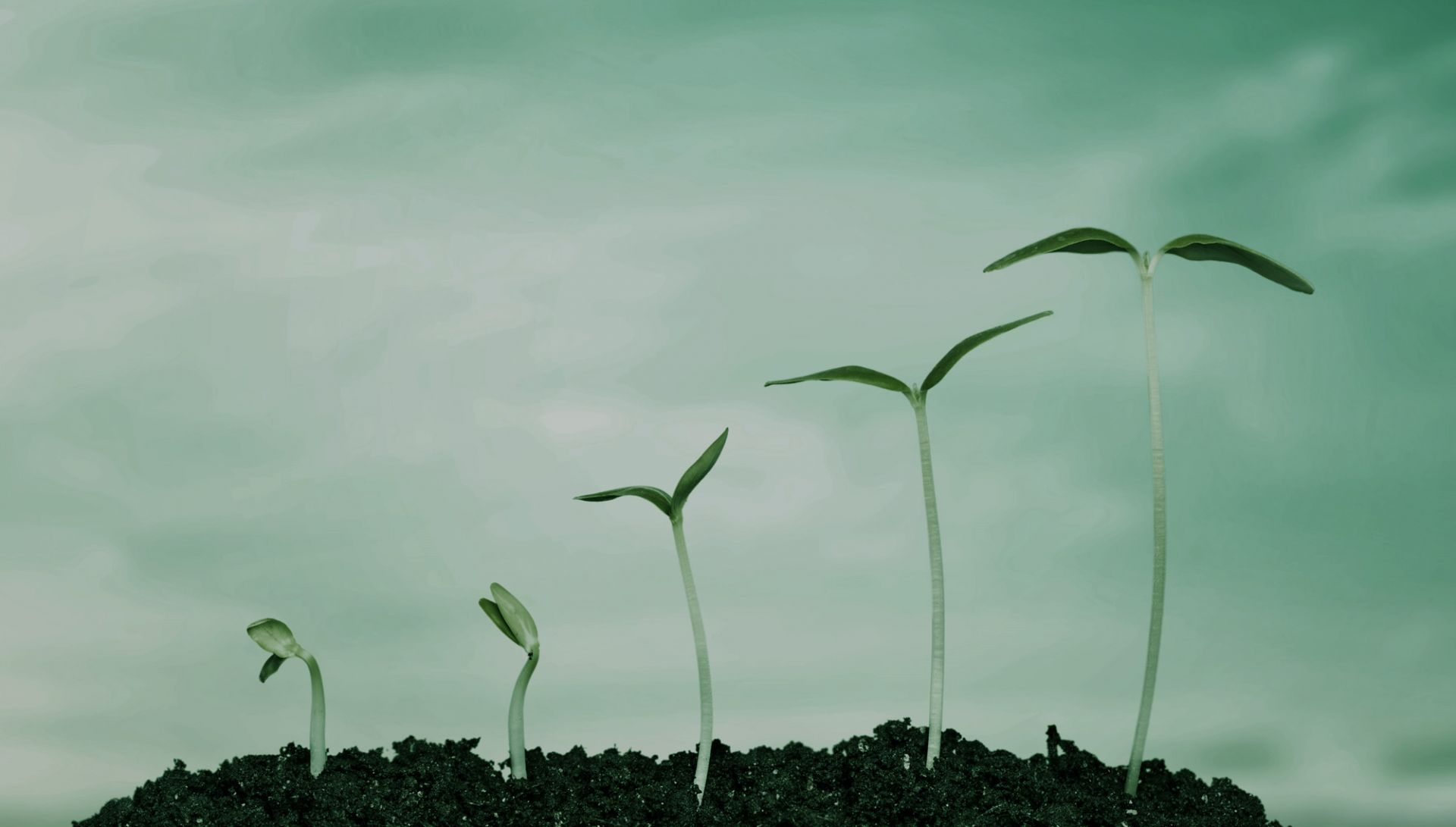 Product Lifecycle Management image of plant growth phases